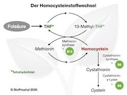 Schaubild Homocysteinstoffwechsel
