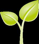Bioprophyl - Natürliche Nahrungsergänzung